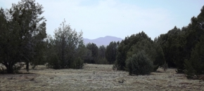 42.56 Acres, All Usable, Soft Soil w/ Trees