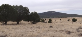36+ Acres of Usable, Nearly Level Land w/ Easy Access