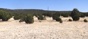 40+ Acres of Usable, Nearly Level Land w/ Easy Access