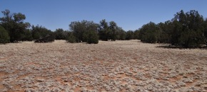 36+ Acres of Usable, Nearly Level Land for $48,500