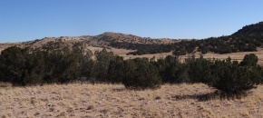 Potential Horse Property with hilltop, trees, meadows and views