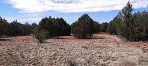 50C JMR,10-acres of Usable Ground with Easy Access and POWER - $27,000