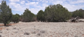 5-Acre Level Lot with Soft Soil and Electric Close-by - $18,000