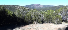 Secluded 39-Acre lot with TREES and Views, $39,500